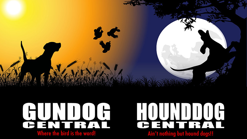 Hunting Dogs For Sale Gun Dogs Bird Dogs Field Dogs And Sporting Dogs