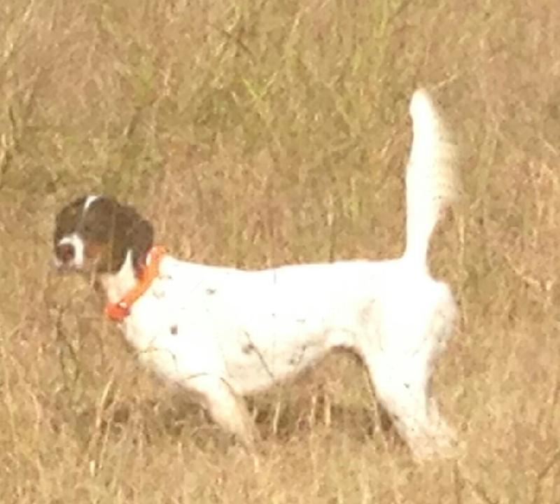 Oak Shadows Dog Kennel
