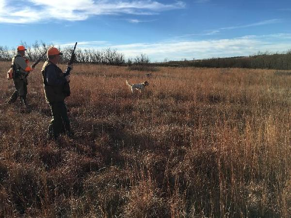 Hunting Dogs for Sale - Pointer - Stud Dogs